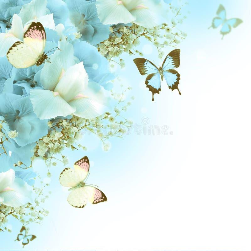 Borboleta, hydrangeas azuis e íris brancas ilustração royalty free