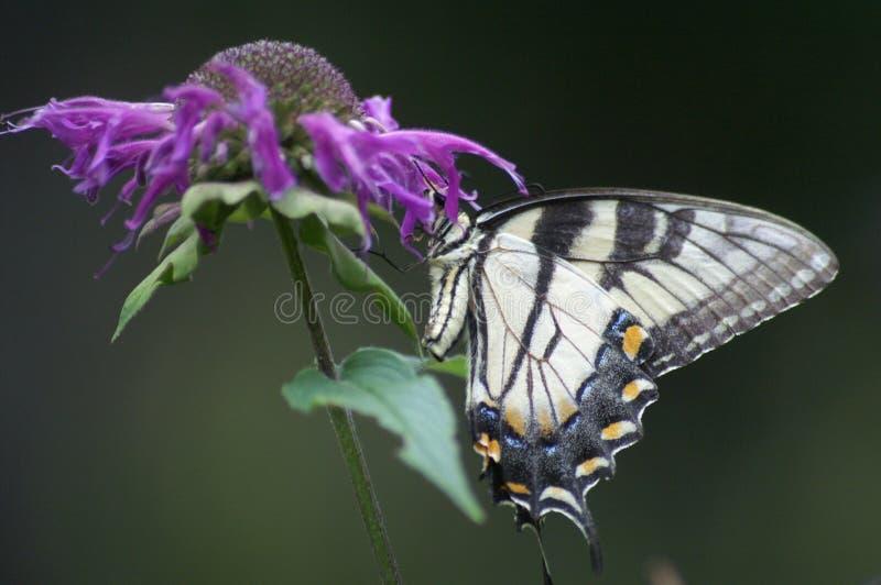 Download Borboleta na flor foto de stock. Imagem de inseto, verde - 12808084