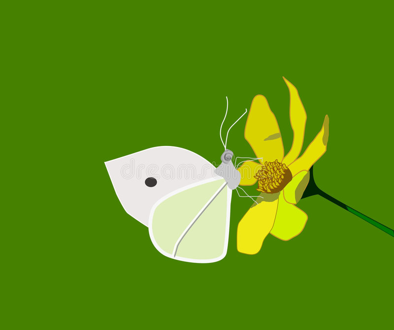 Borboleta na flor amarela fotografia de stock royalty free