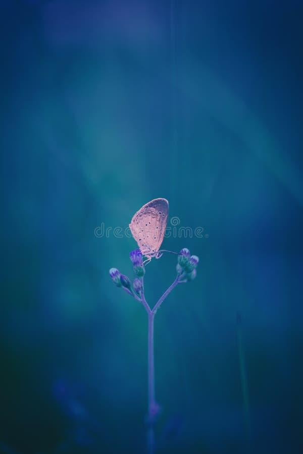 borboleta na flor na natureza Fundo borrado azul da fantasia fotografia de stock royalty free