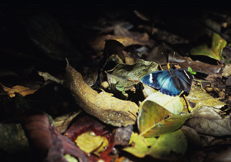 Download Borboleta na luz imagem de stock. Imagem de inseto, azul - 51829