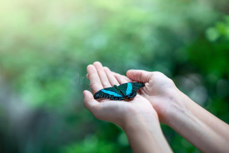 Borboleta na mão da mulher contra o fundo verde natural fotos de stock royalty free