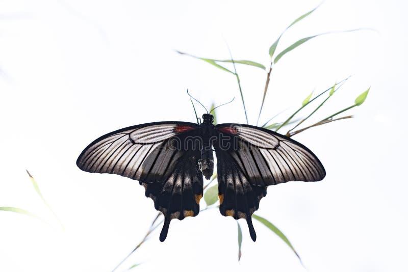 Borboleta no habitat da natureza foto de stock
