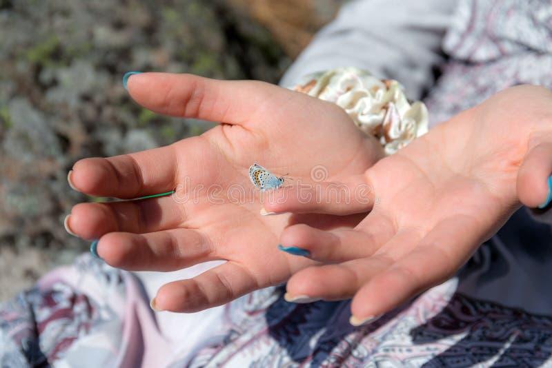 A borboleta pequena senta-se na m?o fotografia de stock