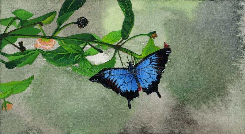 Borboleta preta e azul ilustração do vetor