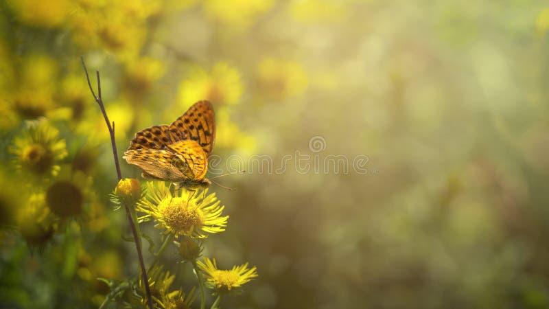 Borboleta que aprecia o sol da manhã sobre a flor fotos de stock royalty free