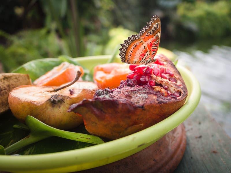 Borboleta que descansa em uma placa do fruto em um jardim botânico foto de stock royalty free