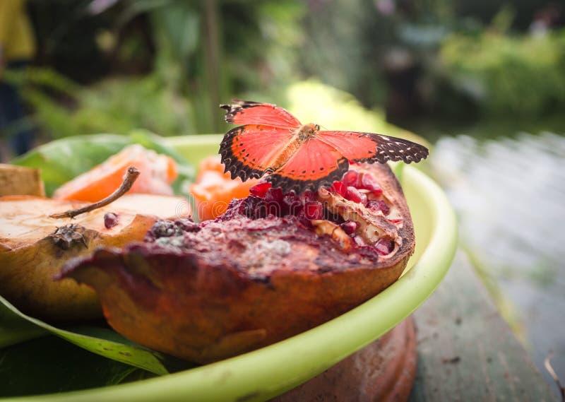 Borboleta que descansa em uma placa do fruto em um jardim botânico imagens de stock royalty free