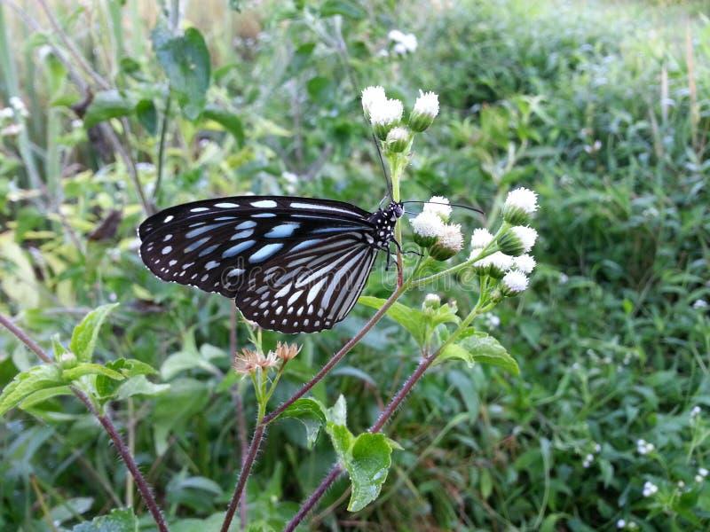 A borboleta selvagem da natureza imagens de stock royalty free