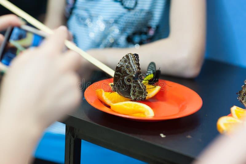A borboleta senta-se em uma laranja em uma placa alaranjada foto de stock