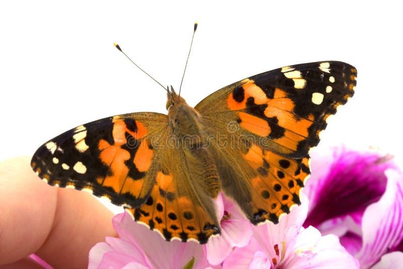 A borboleta senta-se na mão fotografia de stock