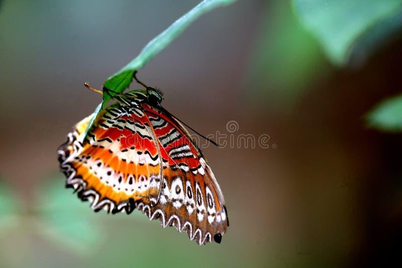 Borboleta tropical da floresta húmida fotos de stock royalty free