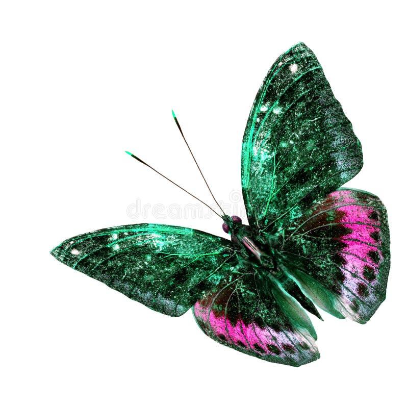 Borboleta verde e cor-de-rosa bonita do voo isolada na parte traseira do branco imagem de stock