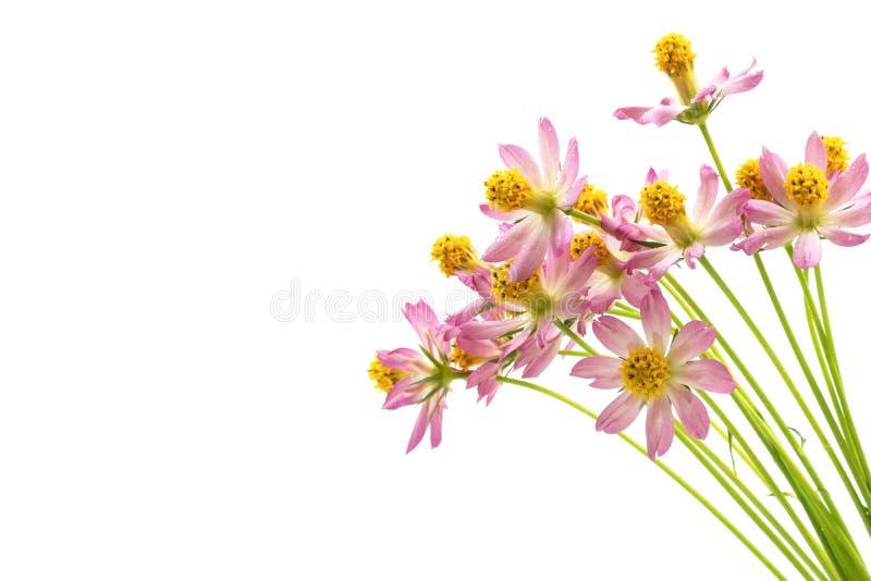 Borboletas acima do fundo branco das flores imagens de stock royalty free