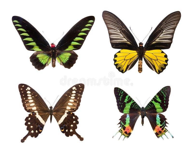 Borboletas coloridas exóticas ilustração stock
