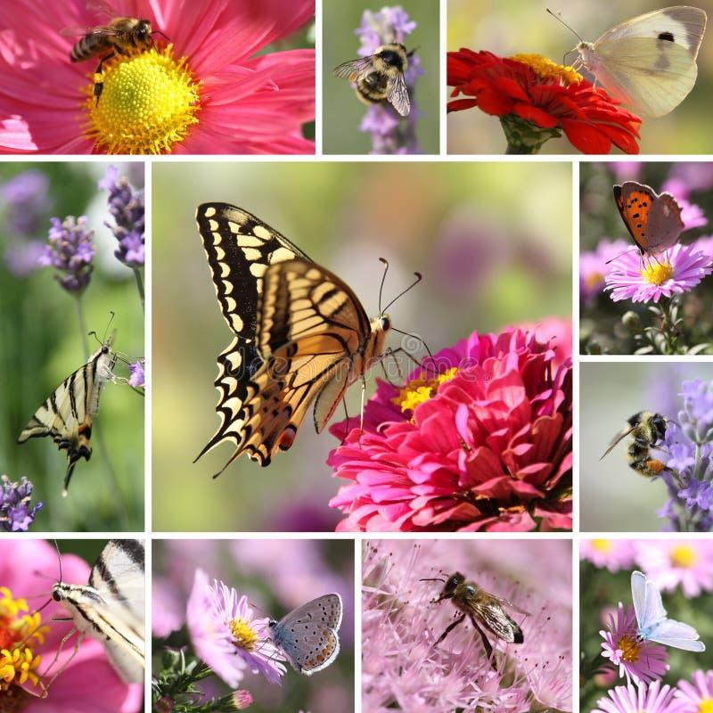 Borboletas e colagem das abelhas fotos de stock royalty free