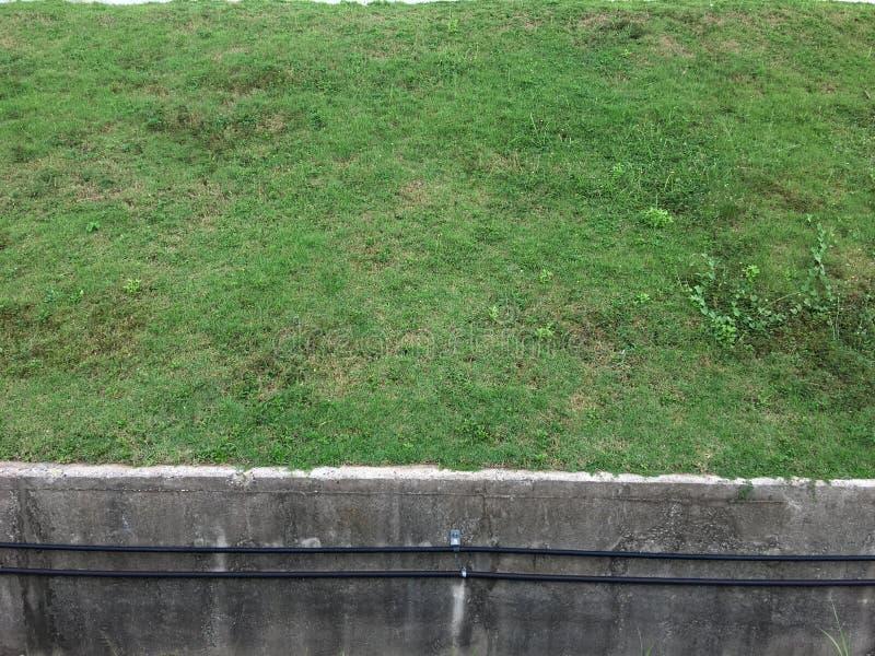 Bord d'herbe photos stock