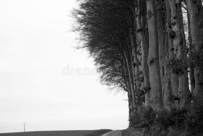 Bord de forêt photo libre de droits