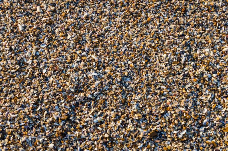 Bord de la mer d'une petite texture de fond de pierre de coquille images libres de droits