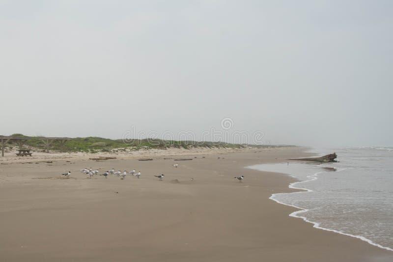 Bord de la mer national d'île d'aumônier photos libres de droits