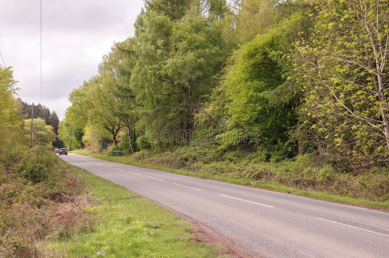 Bord de la route de printemps dans la forêt de doyen photographie stock