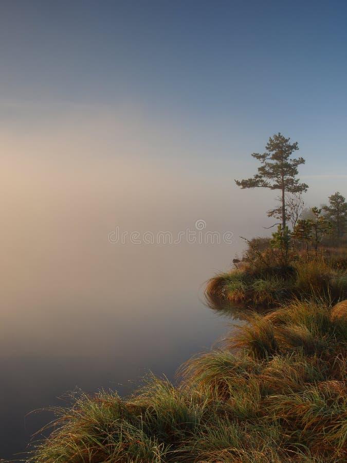 Bord de lac dans un marais images stock