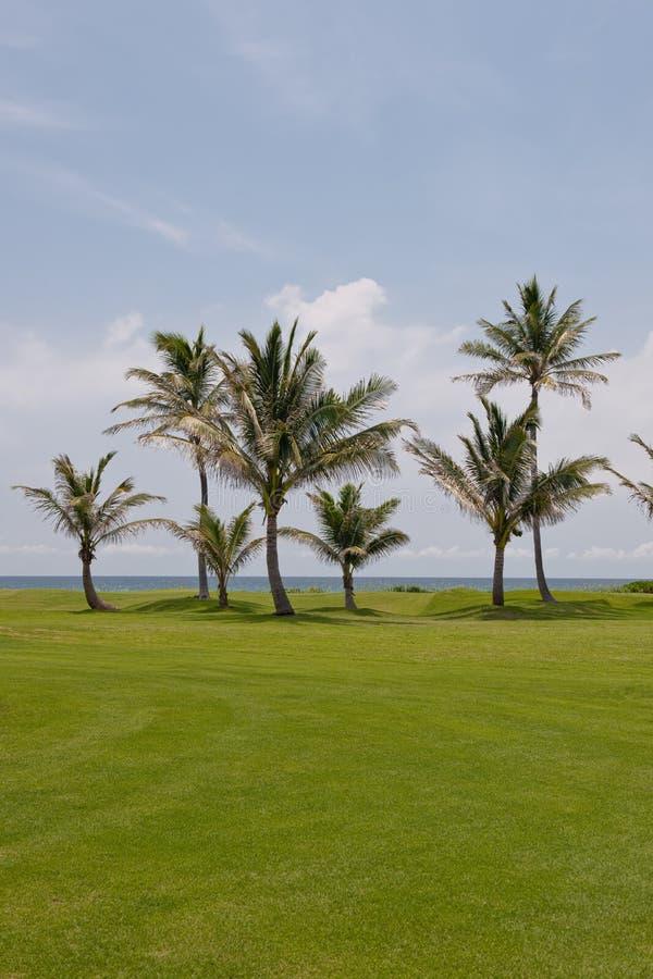 bord de mer de golf de cours photos libres de droits