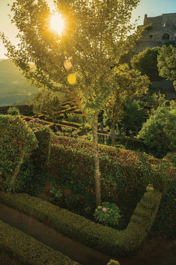 Bord et buissons feuillus dans un jardin en bois sur le crépuscule photo libre de droits