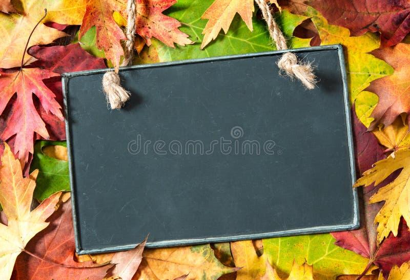 Bord op herfstbladeren royalty-vrije stock afbeeldingen