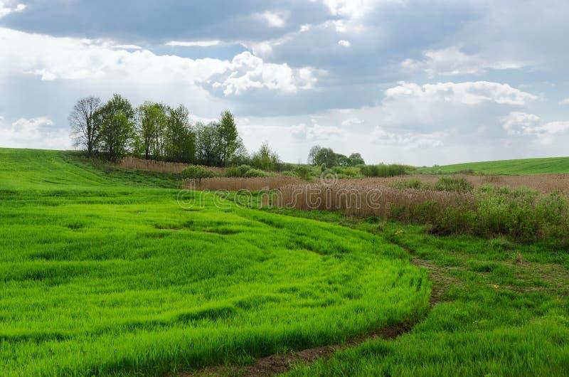 Borda campo verde da colheita agrícola semeada imagem de stock