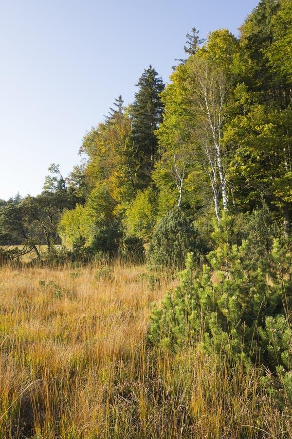 Borda da floresta e dos pantanais brilhantes imagens de stock royalty free
