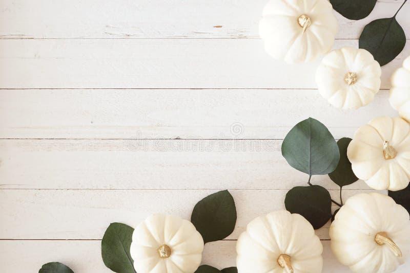 Borda do canto do outono de abóboras brancas e folhas verdes de eucalipto contra fundo branco de madeira imagens de stock