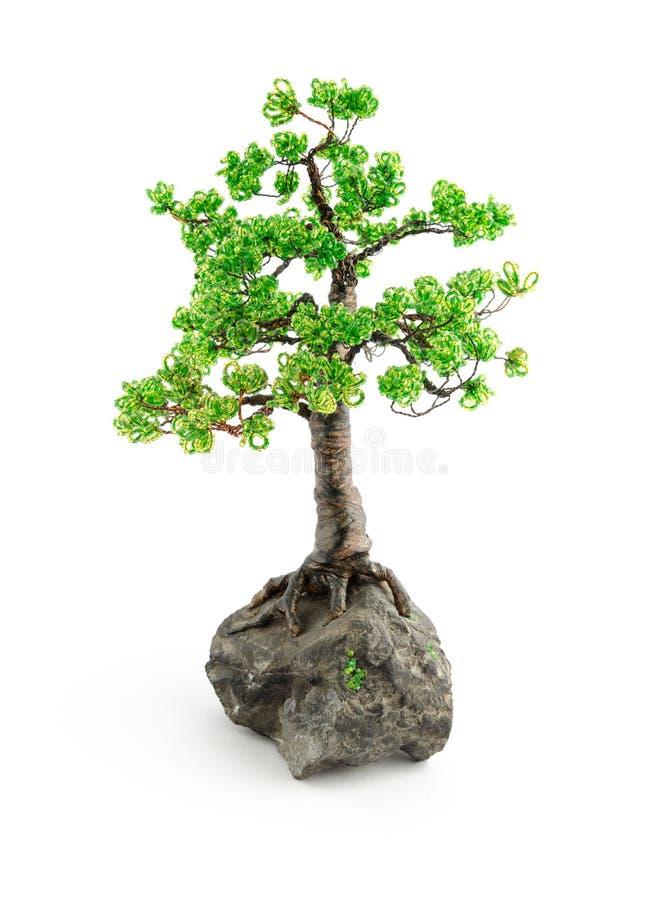 Borda i bonsai isolati su bianco fotografia stock libera da diritti