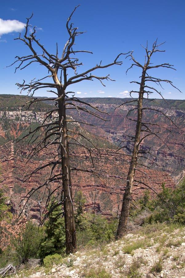 Download Borda Norte Da Garganta Grande Imagem de Stock - Imagem de geological, área: 12804245