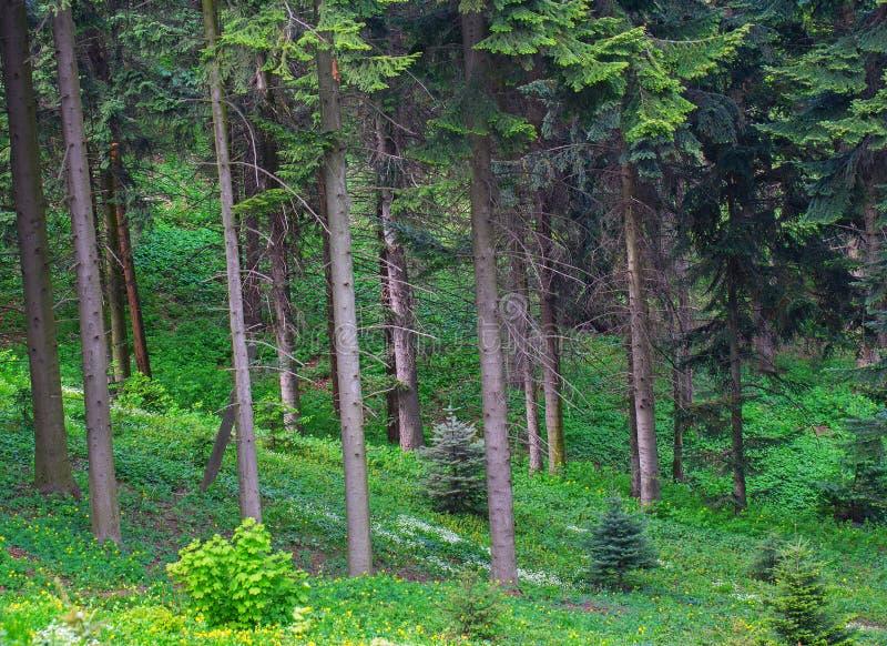 Download Borda verde da floresta foto de stock. Imagem de ritmo - 65576910