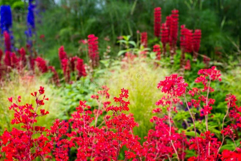 Borde colorido y vibrante del jardín foto de archivo libre de regalías