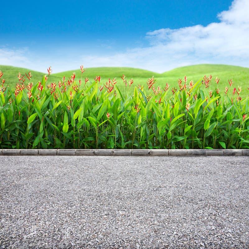 Borde de la carretera e hierba foto de archivo libre de regalías