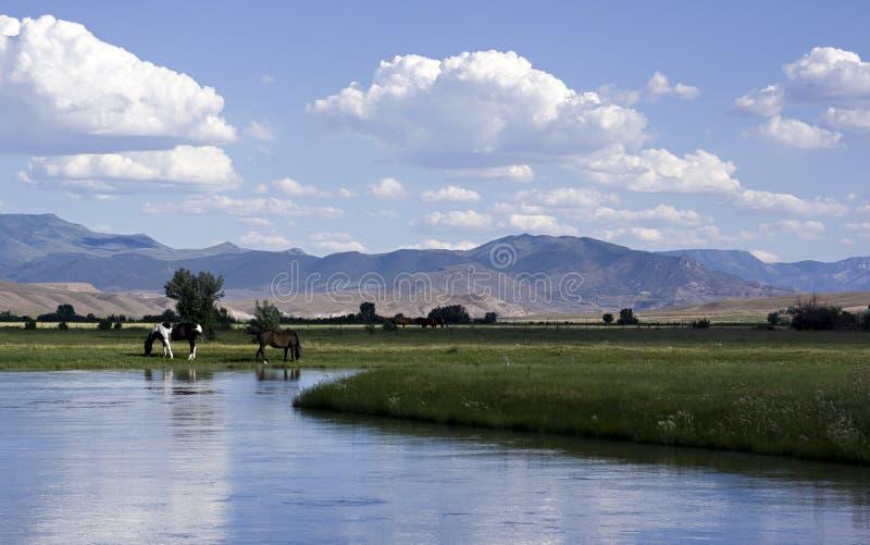 Borde de los ríos foto de archivo