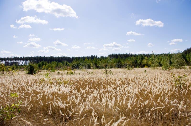 Download Borde de un bosque imagen de archivo. Imagen de atmósfera - 42431131