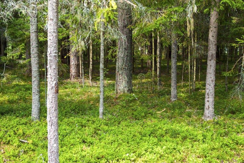 Borde del bosque adyacente del verano fotos de archivo
