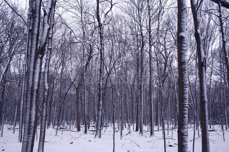 Borde del bosque del invierno fotos de archivo