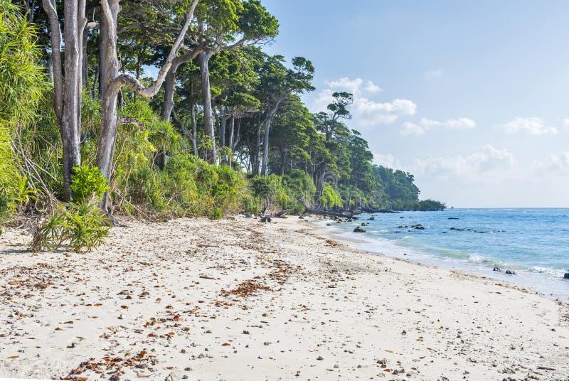 Borde del bosque en la playa del laxmanpur fotos de archivo libres de regalías
