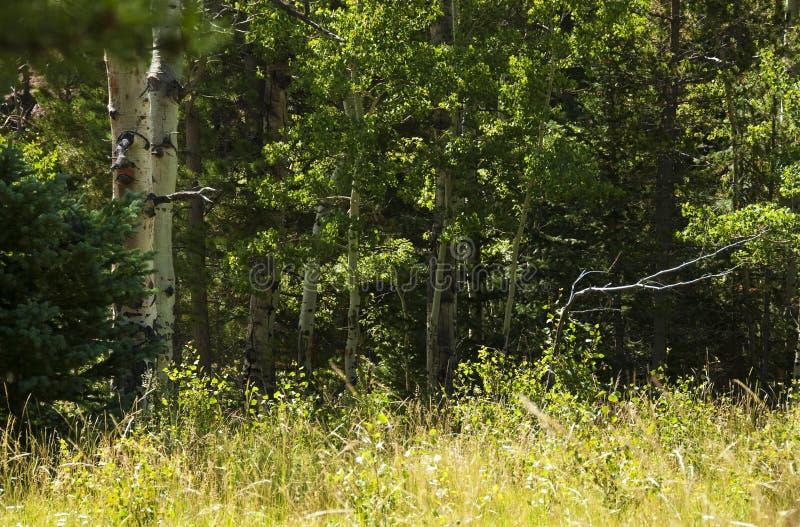 Borde del bosque en las montañas rocosas fotografía de archivo