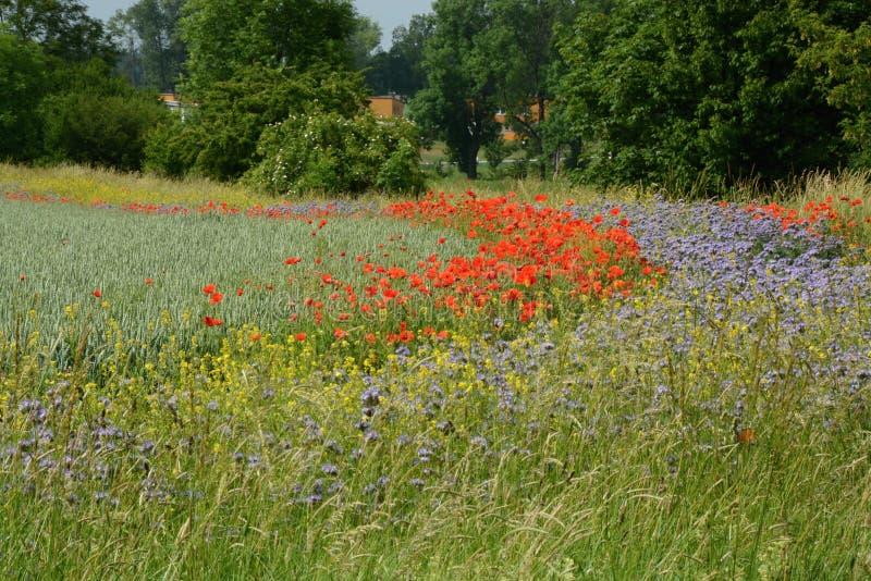 Borde del campo con las flores del prado fotografía de archivo