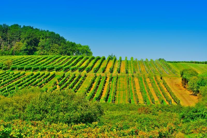Bordeaux photos stock