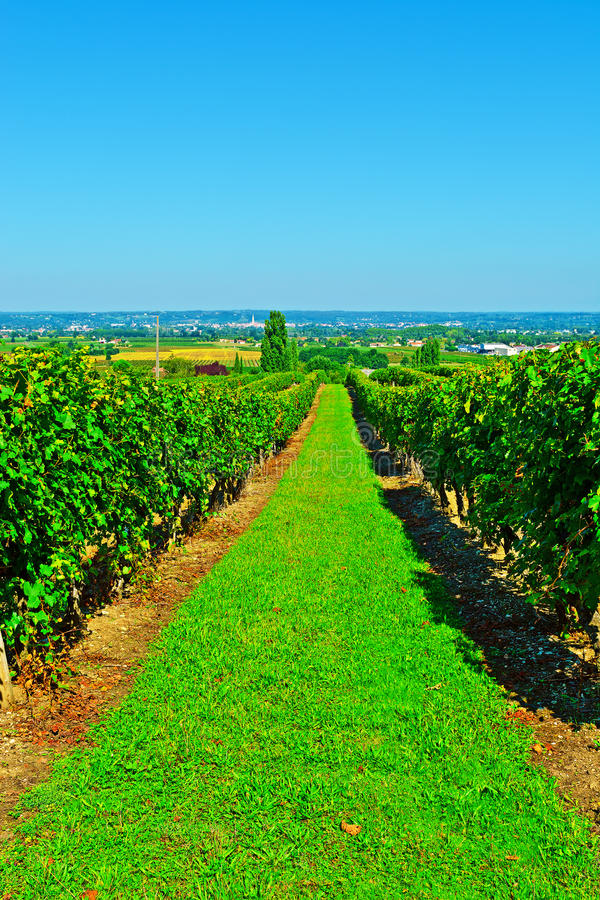 Download Bordeaux stock photo. Image of cultivation, france, nature - 39775936