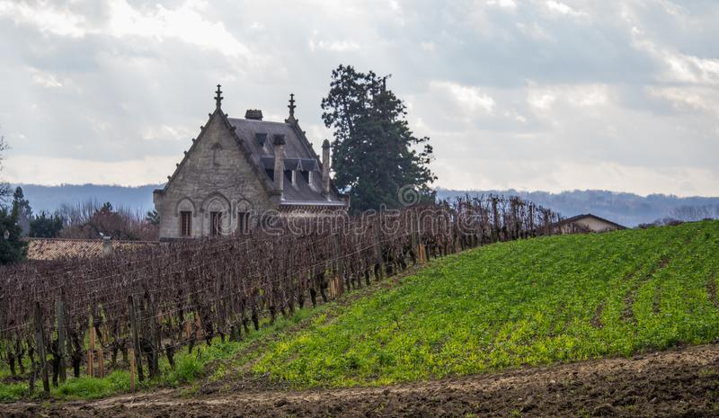 Bordeaux vineyards. Vineyards and hills in autumn. stock photography