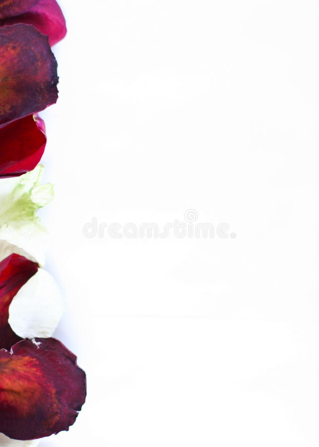 Border. Abstract left border og white and red rose petals royalty free stock photo