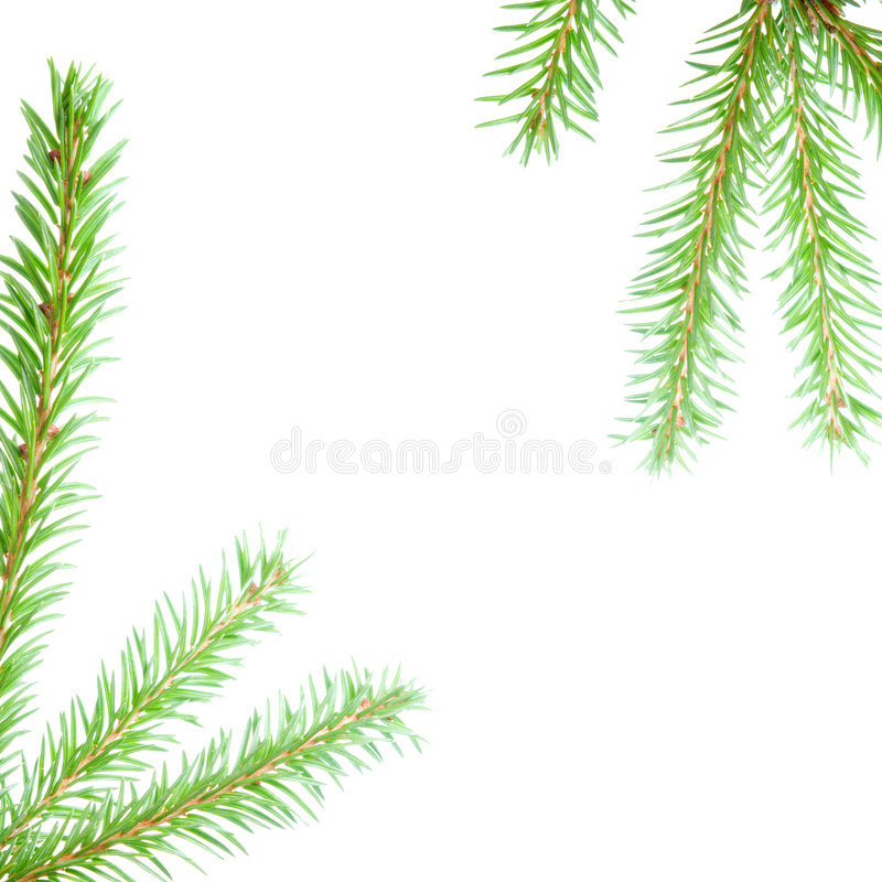 Border from branches stock image