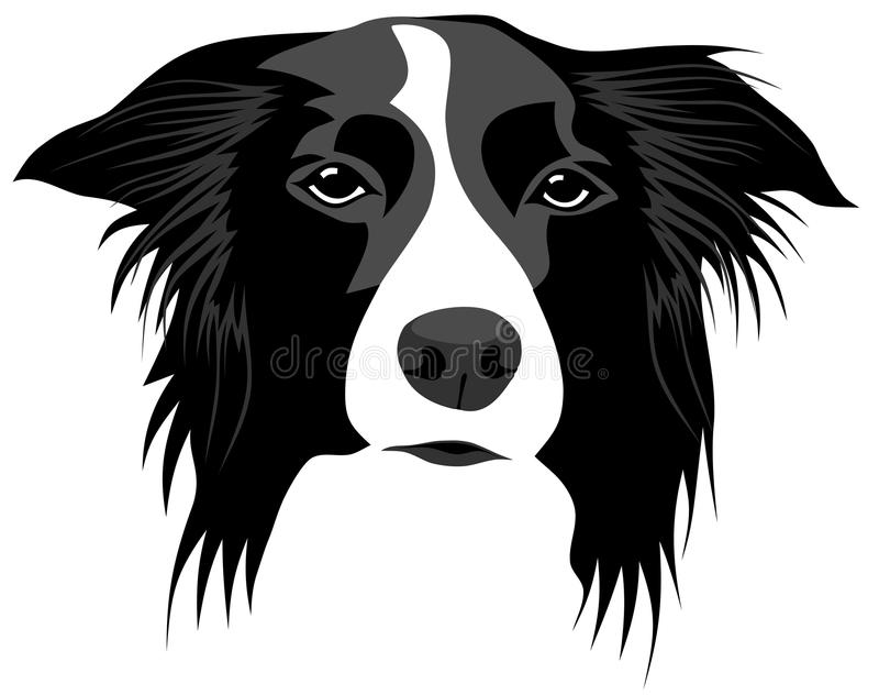 Border collie stock illustration
